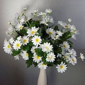 Bush of 18 Daisy Stems